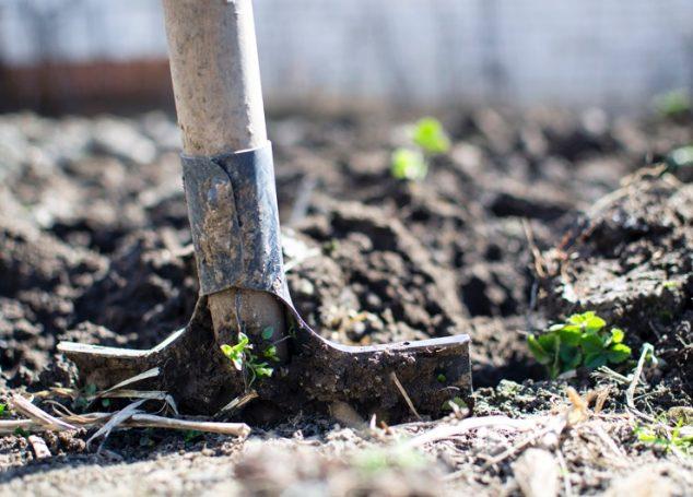 4 kroki do własnego ogrodu